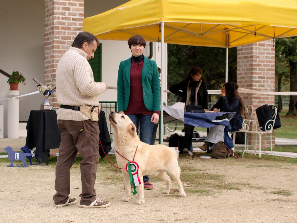 puppy and veteran show