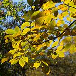 Tree and sun at Avalon