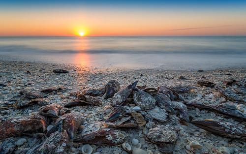 ocean sunset sea sky sun shells beach seashells sand surf waves unitedstates florida clam shore fl marcoisland hanusiak