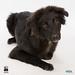 FCAS Dogs by fairfaxcounty
