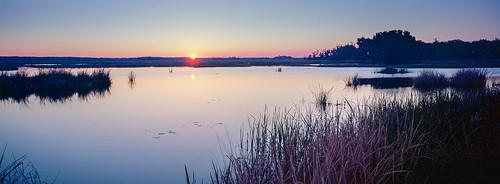 panorama sunrise pano marsh savannah xpan panoramiccamera savannahnationalwildliferefuge tx1 ektar100 laurelhillwildlifedrive