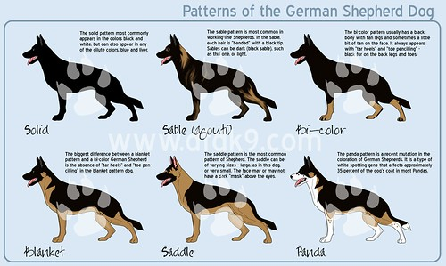 German Shepherd Patterns | by DFDK9