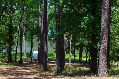 park trees pier fishing woods louisiana parks trails trail cypress blackbayou bossier jimnoetzel