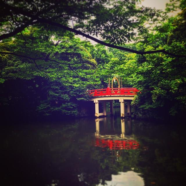 Hikawa shrine #Omiya #saitama #Japan #shrine #instacool #instagood #instaphoto #bridge #nature