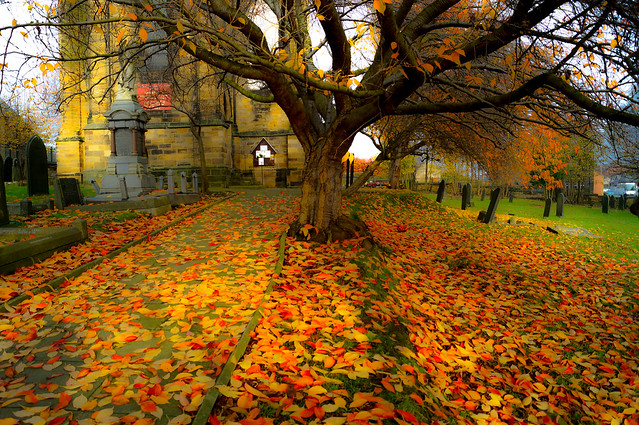 Autumnal Carpets? (Rating:8)