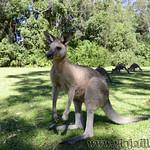 01 Viajefilos en Australia. Morriset 04