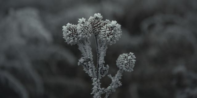 frozen nature 7943