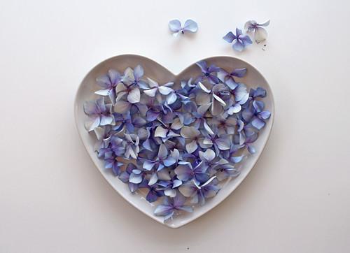 Heart of hidrangea