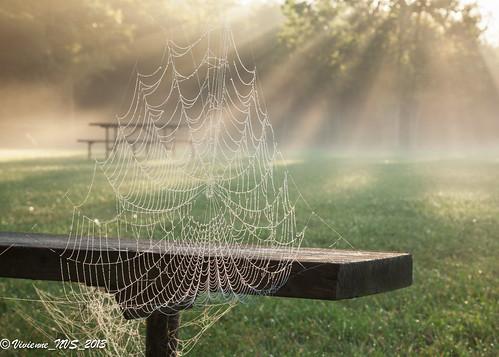 mist fog sunrise illinois spiderweb preserves sunbeams lakecounty foggyscenes halfdayforestpreserve