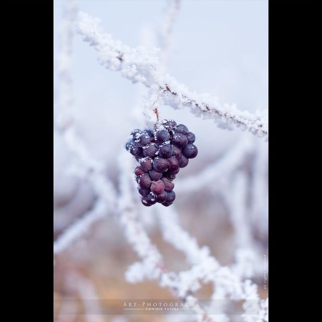 The lost grape | FUJI x-PRO1