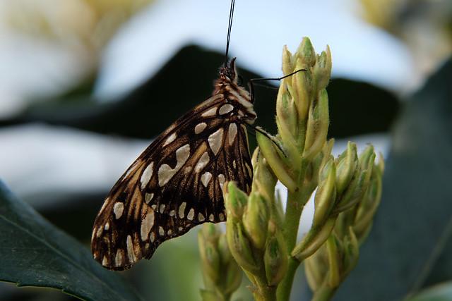 Papillons en Liberté 2014 - Photo 11