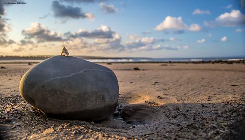 beach stone wales clouds sunrise landscape seaside sand shell pebble porthcawl d3100