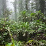 07 Viajefilos en Australia. Dorrigo Rainforest NP 03