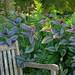 13104 Earful from Plants, Dallas Arboretum, Tx