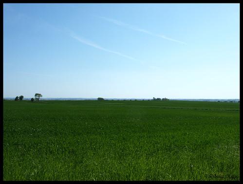 sky lund verde green field skåne sweden horizon schweden himmel vert ciel cielo campo sverige grün 空 緑 horizont suecia champ horizonte acker åker orizzonte suède grön スウェーデン svezia 畑 horisont 地平線