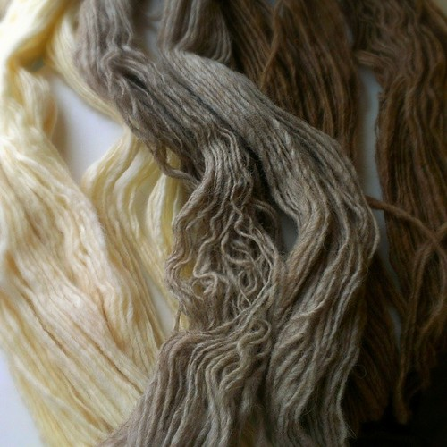 Three shades of #Shetland. #handspun #wool #yarn | by gwen.erin