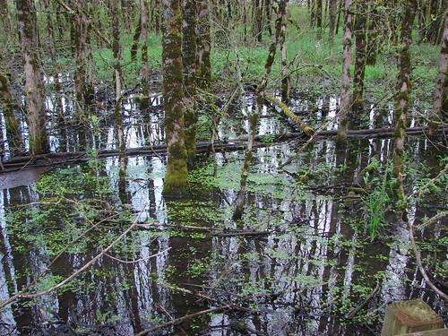 Pond in Ankeny Wildlife Refuge