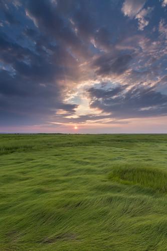 sunset sea summer green grass coast us newjersey unitedstates air salt nj marsh oceancounty saltmarsh spartinapatens cordgrass singhray edwinbforsythenwr darylbenson littleeggharbortownship gravelingpoint