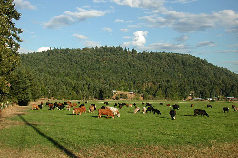 Farmland in Yellow Point, Nanaimo, Vancouver Island, British Columbia, Canada