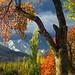 Mount Rakaposhi 7788M in Autumn.. by M Atif Saeed