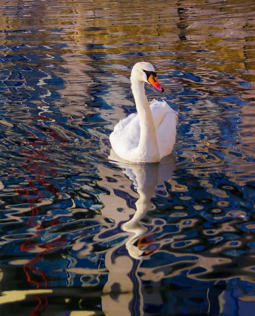 Swanning in