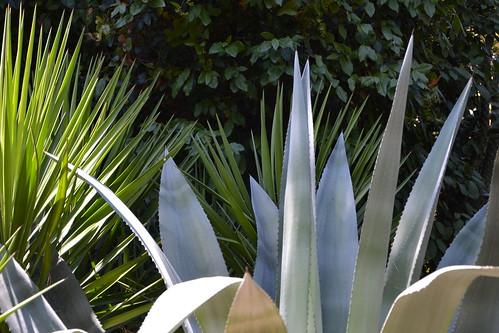 (13) Le Parc du Mugel et son jardin exotique - La Ciotat 33106111486_2cbdcd6673