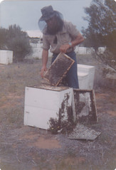 Hives in Clover at Hatherleigh c1978