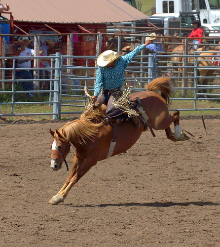 Bronco Riding Ketchum Kalf Rodeo Glenwood Wa