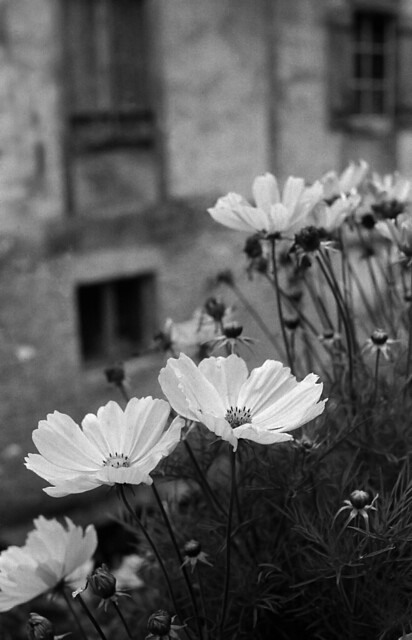 4266.Flowers