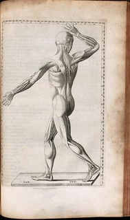 Muscles of the body | by Thomas Fisher Rare Book Library, UofT