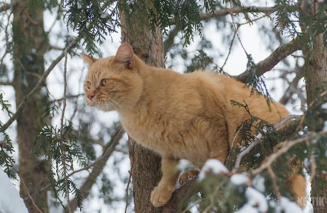 Cat Climbing - DSC_0712