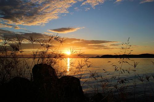 sun water silhouette sunrise gras portstephens