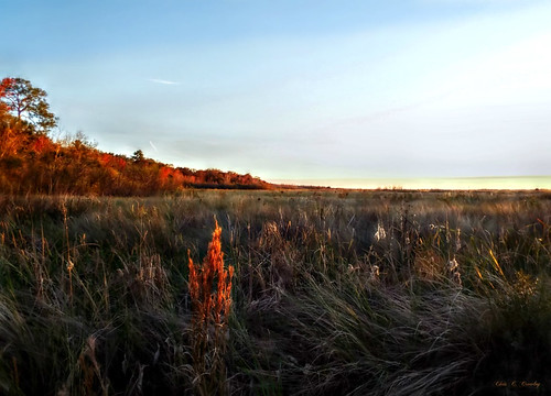 likeafloridasafari thelakewoodruffnationalwildliferefuge lwnwr wetlands scenic landscape grass reeds plants nature trees sky clouds