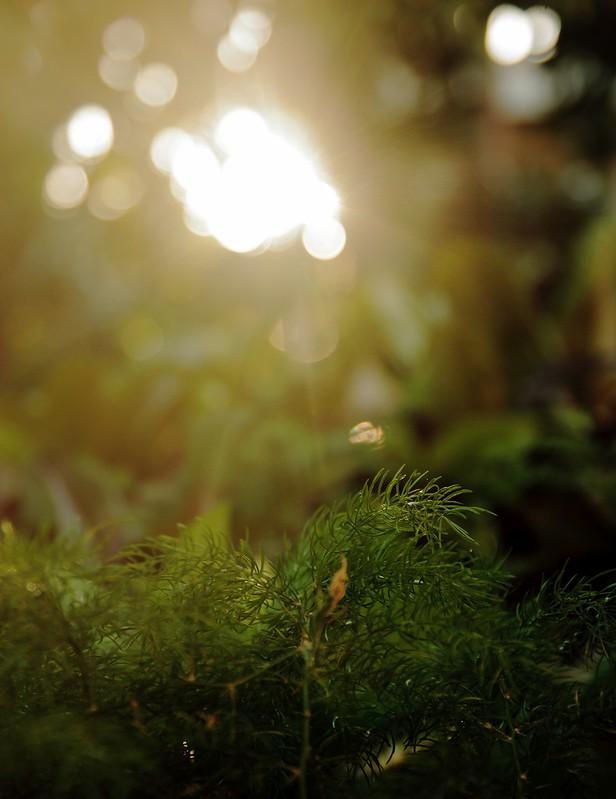 Glints of Sunset light