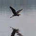 Morning Fly By by Don McCullough