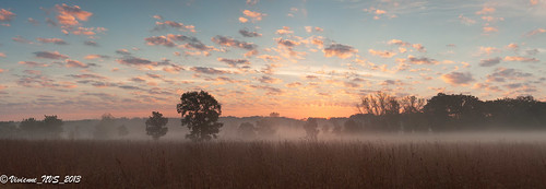 mist fog sunrise illinois preserves lakecounty foggyscenes halfdayforestpreserve