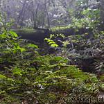 07 Viajefilos en Australia. Dorrigo Rainforest NP 31