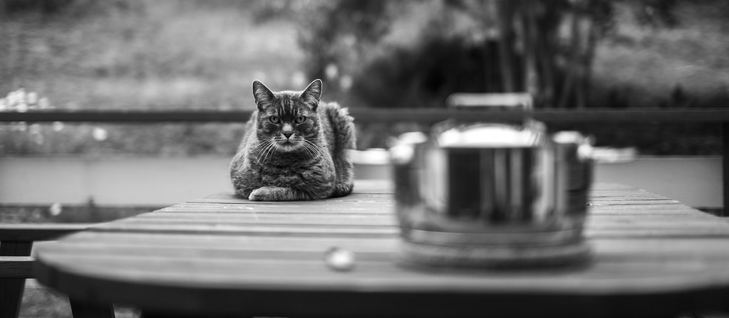 Waiting for the fish...
