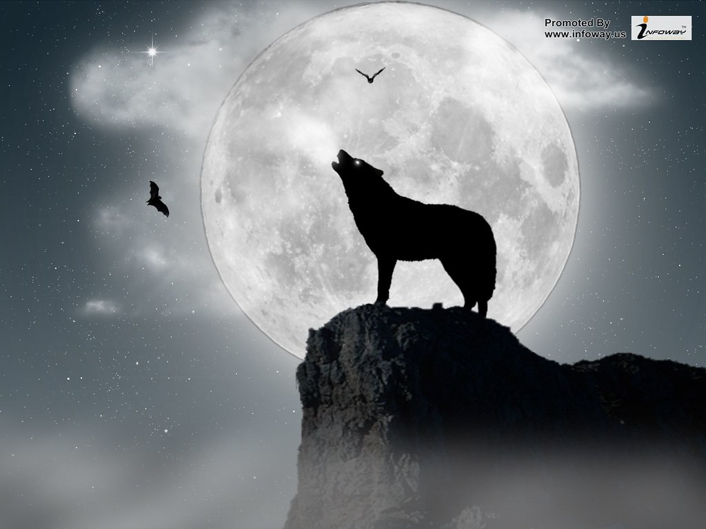 Hd Wallpapers Wolf Wallpaper Moon Hd Wallpapers Wolf Wallp