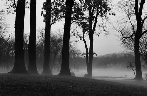 trees bw mist lake blancoynegro misty fog frozen blackwhite newjersey pond nikon essexcounty foggy nj verona ethereal frozenpond d600 veronapark sih creepytrees