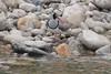 Punatsay Chu on Sankosh River, Punaka, Bhutan by Paul A Thomas