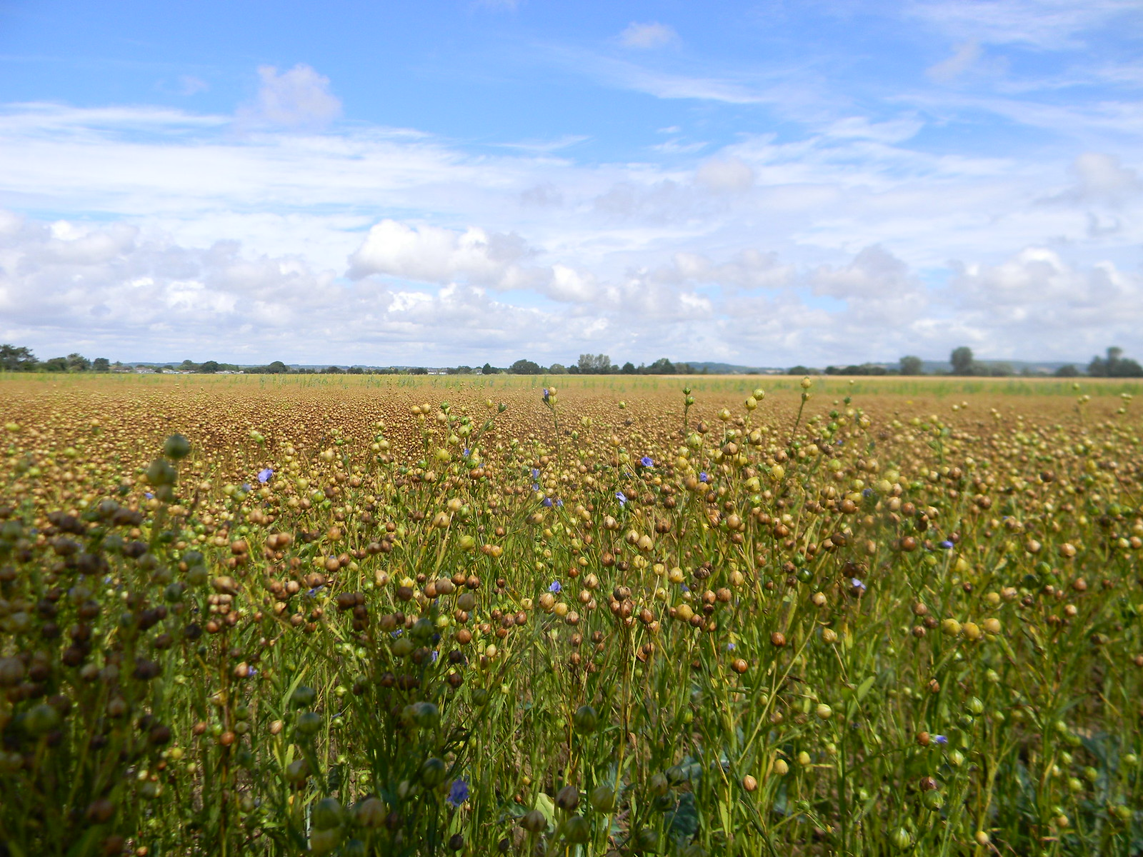 Linseed Southbourne to Chichester