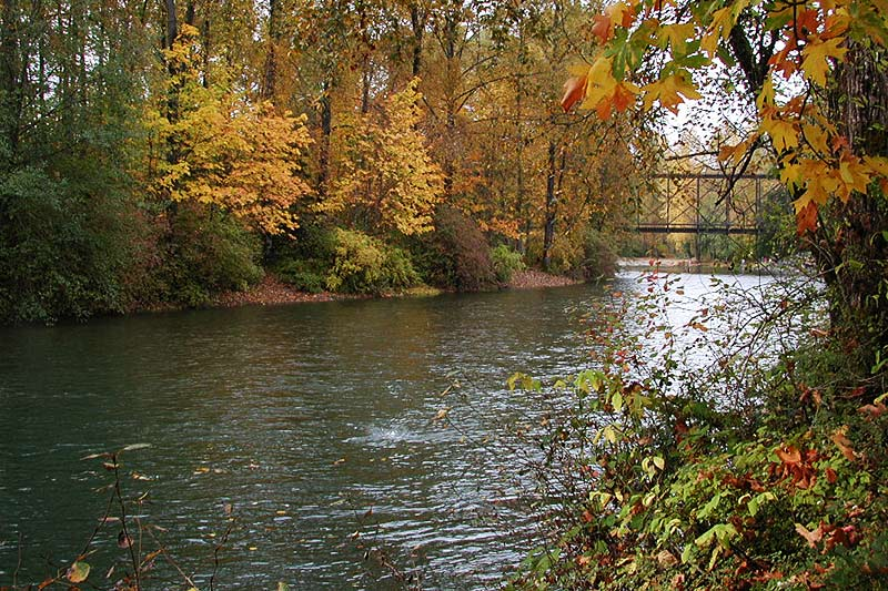 Cowchan River flowing through Duncan, Cowichan Valley, Vancouver Island, British Columbia, Canada