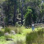 06 Viajefilos en Australia. Cathedral Rock NP 13