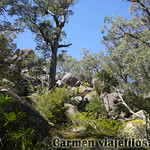 06 Viajefilos en Australia. Cathedral Rock NP 02