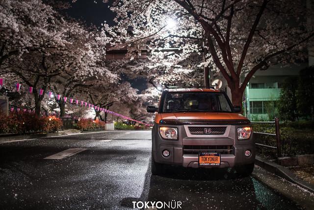 Sakura Bunny // Honda Of America Element+Tokyonür Concept