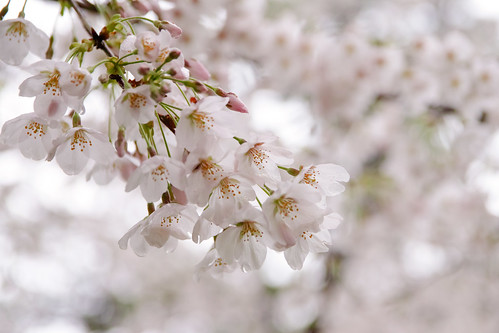 SDQ_5267 | by kwmr