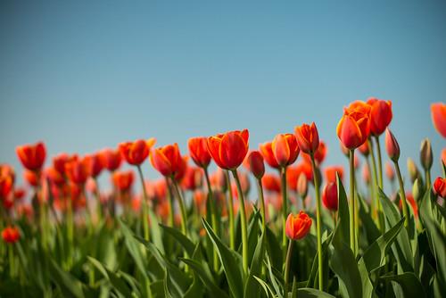 Dutch Spring | by romanboed