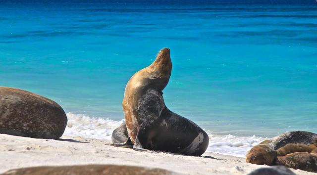 Espanola Island, Gardner Bay, Galapagos