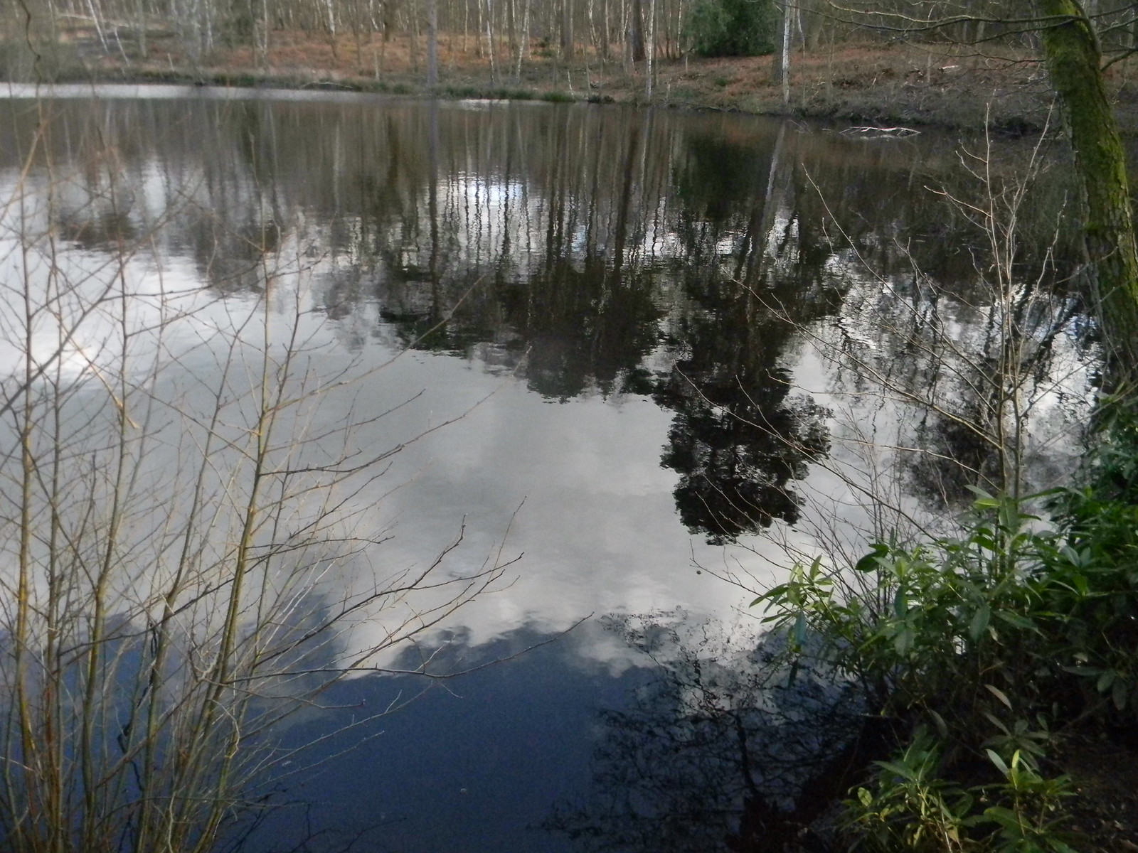 Reflections: the Generals Pond Guildford to Farnham